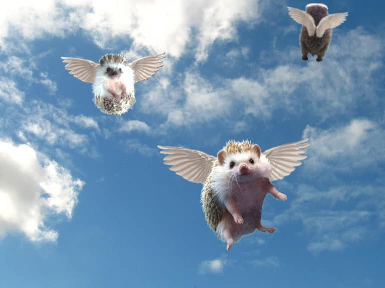 hedgehogs-in-heaven-768x576.jpg