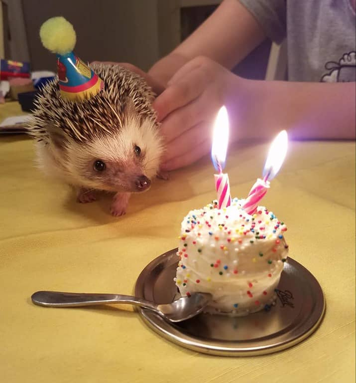 Swell A Hedgehog Happy Birthday Party Ideas Recipes Heavenly Hedgies Funny Birthday Cards Online Inifodamsfinfo